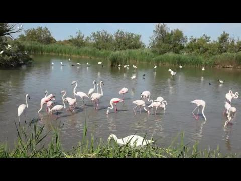 Camargue Park : Birds in the Lake - France